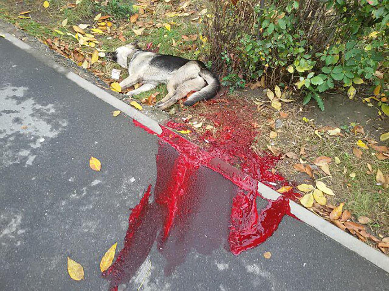 Соцсети обсуждают убийство милиционером собаки вцентре Речицы