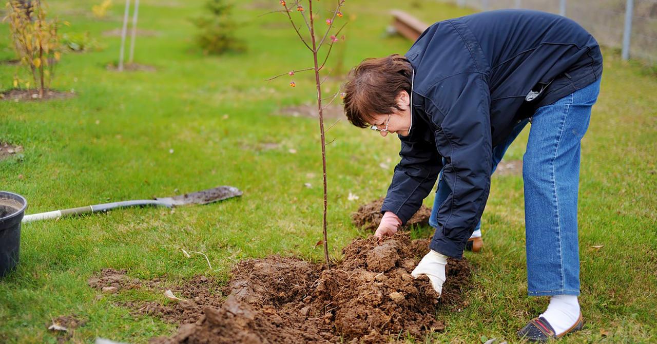 Дачникам и садоводам Речицы на заметку. Когда лучше сажать деревья: осенью или весной?   Дняпровец. Речица online